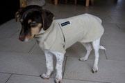 Skibby - Hundepullover mit Snood in Sand