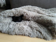 Auch Bulldoggen mögen es kuschelig :) - Kuschelhöhle im Teddy Design