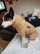 Pullover mit Snood - Camel