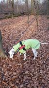 Hundemantel Softshell Regenabweisend mit Brustlatz & Reflektoren - Aussen: Softshell Hellgrün // Innen: Fleece Schwarz