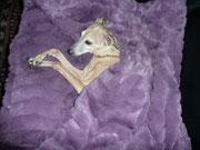Lady Linda-Lucrezia in ihrer neuen Kuschelhöhle