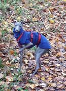 Windspielmädchen Bella - Windhundpullover mit Snood in Blau
