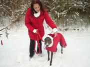 Partnerlook mit Frauchen :-).....Filou der Weihnachts Grey :-)