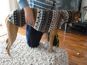 Windhundpullover mit Snood - Norweger Design (eine Whippe der sich nicht gerne fotografieren ließ :) )