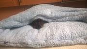 Dackeldame Annie eingekuschelt in ihrer Teddy-Kuschelhöhle in Hellblau :)