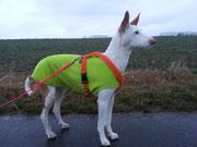 Flora - Hundepullover Grün
