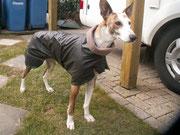 Tyson - Regenabweisender Mantel mit Gehschlitzen