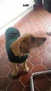 Lotti - Hundepullover Polarfleece Tanne