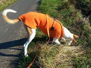Flora - Windhundpullover mit Snood in der Farbe Orange