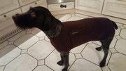 Cleo - Hundepullover Polarfleece Braun
