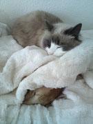 Auch Katzen mögen Kuschelhöhlen :) Jamie & Gremlin