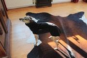 Luna - Windhundpullover mit Snood (Fleece Schwarz)