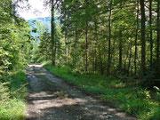 Mischwald im Kanton Obwalden