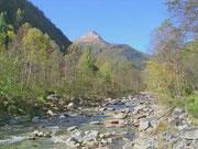 Auenwald im Onsernonetal