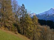 Waldränder mit angrenzender Wiese