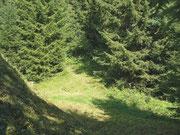 Fichtenwald Montagne de Fecon VS