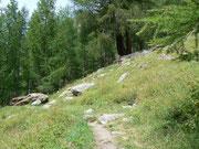 Lärchenwald im Saastal VS