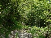 Mischwald im Kanton Fribourg