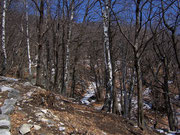 Birkenwald Monte Carasso TI