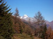 Lärchenwald im Lötschental VS