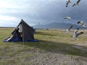 Tibet am Zelt