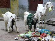Indien, Varanasi, Müllabfuhr