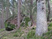 Gammelkog i öster