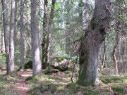 Naturskog