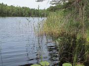 Gotlandsag i Bergsjön