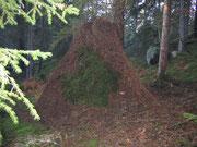 Höghus i myrornas skog