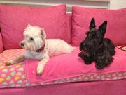 Scottish & Westhighland Terrier warten auf ihre Besitzer