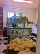 Husky nach dem Unterwolle entfernen
