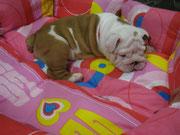 В кроватке