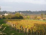 Vignoble du CHATEAU LAMBERT - Vin de Fronsac