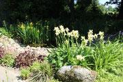 Hereinspaziert Garten Scheele