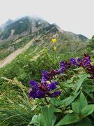 五竜岳を仰ぐ