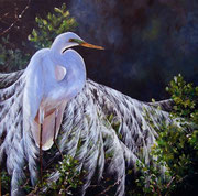 Egret moonlight