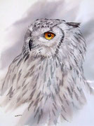 Eagle Owl Eurasian portrait