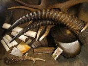 Bois de cerf, chevreuil, antilope cheval, corne, buffle, os, nacre