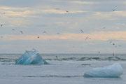Iceberg nel mare