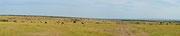 Panoramica con gnu