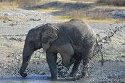 Elefante che gioca
