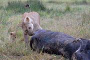 Madre, cucciolo e bufalo