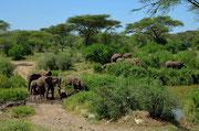 Elefanti sulla strada