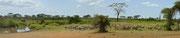 Panoramica con zebre e elefanti
