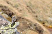 Un uccellino