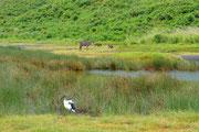 Uccello, antilope e facoceri