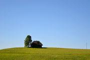 Casa e albero