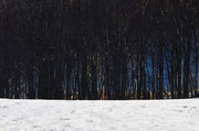 Neve ed alberi