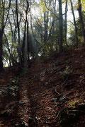 Ancora bosco